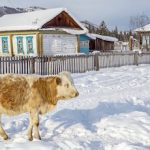 Более 95 млн рублей получит республика на развитие сельских территорий