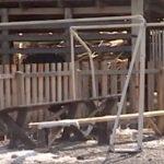 Ребенок в Узнезе почти ослеп из-за упавших на него футбольных ворот