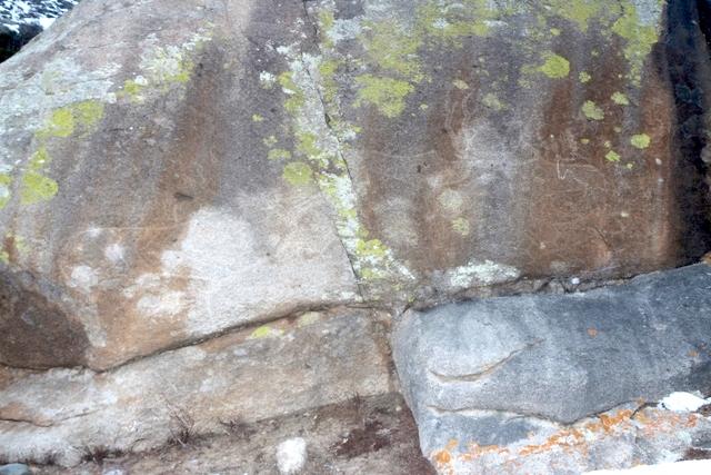 Наскальные изображения тигра иоленей признаны самыми большими петроглифами Алтая