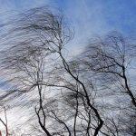 На Алтае ожидается шквальный ветер, объявлено штормовое предупреждение