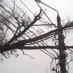 28 населенных пунктов в трех районах остались без света из-за сильного ветра