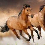 Семилетняя туристка упала с лошади и погибла