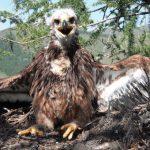 Противочумные мероприятия привели к снижению численности пернатых хищников