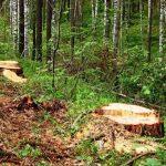 На Алтае и в Хакасии эксперты обнаружили нарушения при ведении санитарных рубок леса