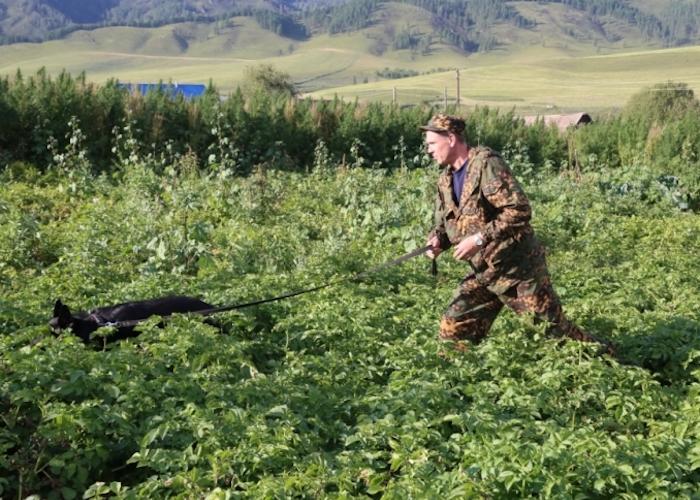 В Ильинке вместе с картофелем в огороде выкопали гранату