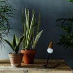 Комнатные цветы – роскошное украшение интерьера