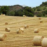 Более 180 тыс. га кормовых культур убрано на Алтае