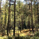 Лесные массивы, ошибочно отнесенные к сельхозземлям, вернут в лесной фонд