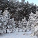 Морозы продержатся до конца новогодних каникул