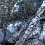 В Чемальском районе Toyota врезалась в дерево, три человека получили травмы