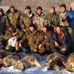 В Горном Алтае объявили конкурс на лучших волчатников