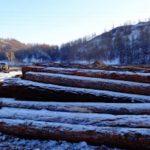 Житель Ябогана незаконно срубил 62 лиственницы