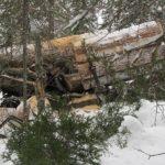 В Турочакском районе в результате ДТП погиб водитель лесовоза