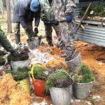 В Горном Алтае восстановят 136 га лесов, поврежденных пожарами и ветровалами