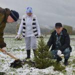 На «Жемчужине Алтая» чиновники высадили около сотни саженцев ели
