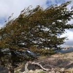 Синоптики прогнозируют сильный ветер