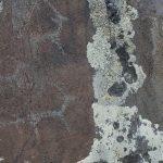 Около Каспы впервые обнаружены петроглифы