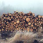 В Усть-Кане главный лесничий обвиняется в незаконной рубке леса